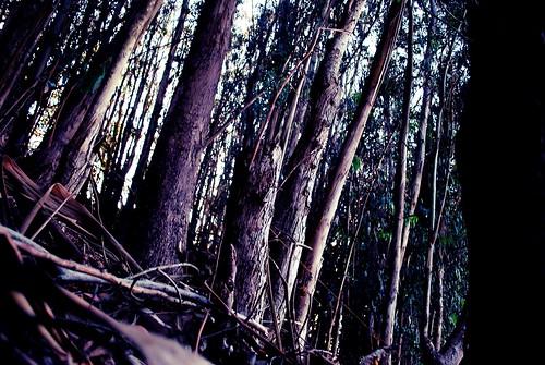 Sellick Wood.