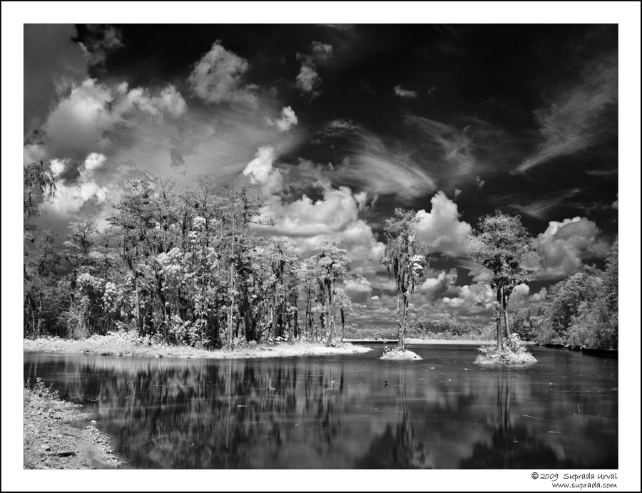 Everglades in Infrared - 1