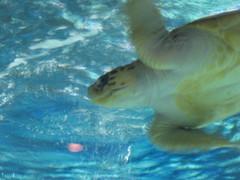 Newport Aquarium 018 (foodbyfax) Tags: newportaquarium