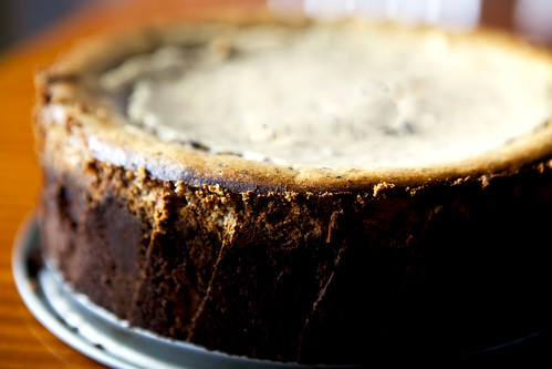 Unadorned chocolate chip cheesecake