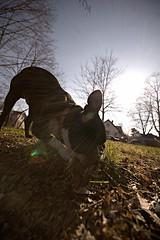__________ (Jason_Price) Tags: trees houses sky dog sun grass leaves bostonterrier bare flare eatinggrass sigma1020