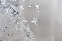 Givre et colibri (Caroline Laplante) Tags: de fentre glace givre kartpostal the4elements