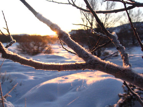 Day 7 Frozen branch in sun