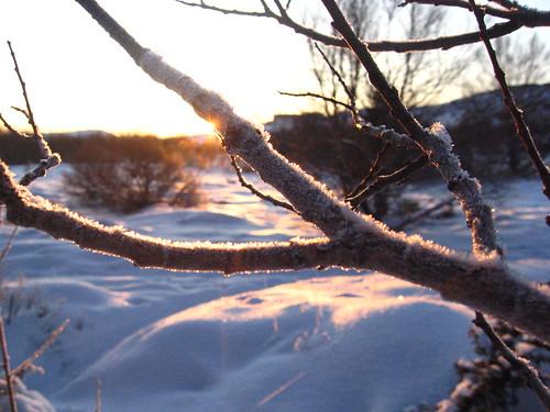Day 7 Frozen branch in sun