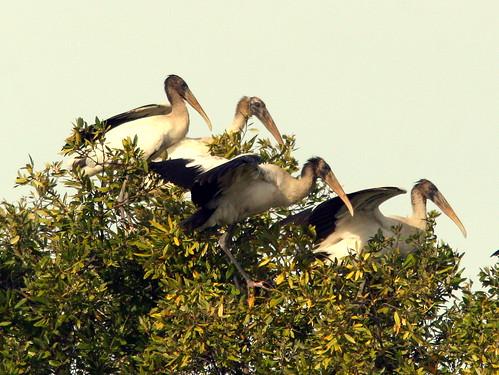 Stork Cluster 20100113