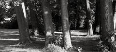 Blauwe Hoeve, Kortrijk (bm^) Tags: park bw white black tree water blackwhite bomen nikon eau belgium belgique beek zwartwit belgi boom westvlaanderen zwart wit parc blauwe kortrijk courtrai hoeve d90 nikond90  westernflanders
