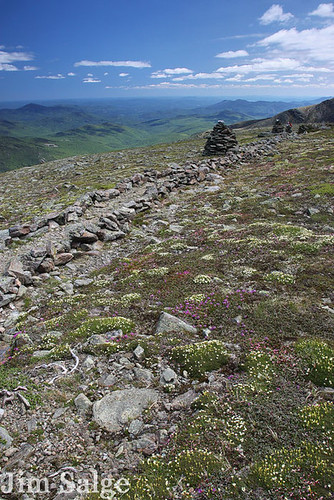 The Alpine Garden Trail on Mount Washington