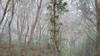 Hiking on the Sentiers de Tamarins (Götz_) Tags: réunion france hiking sentiers de tamarins trekking trek hike forest tamarind