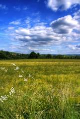 Mother Nature (HarryBo73) Tags: blue sky green field clouds feld himmel wolken eifel grn hdr satzvey 3exp