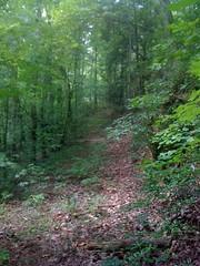 6 - Trail