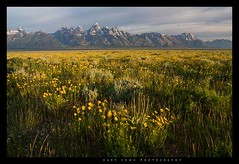 IMG_1589RAW (sowaphotography) Tags: canon wildflowers teton grandteton 40d garysowa