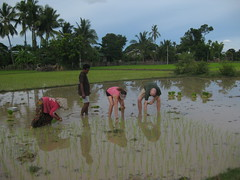 Carrie and I plant rice in Don Det