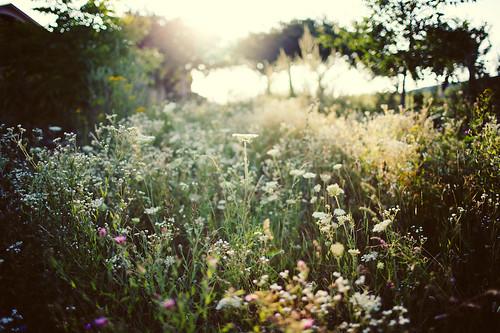 Ukraine Countryside