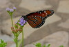 Butterfly (Zooman_723) Tags: nature supershot natureplus theunforgettablepictures unforgettablepicture alwaysexc