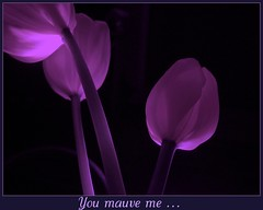 You Mauve Me ... (W J (Bill) Harrison) Tags: flowers three colours purple sony tulip stems mauve picnik vosplusbellesphotos expressyourselfaward dabblesandart