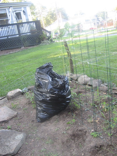 Bagged the Diseased Plants for the Trash