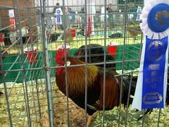 Millarsville Fair Day-2