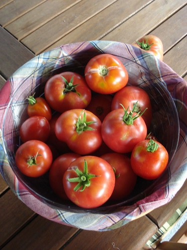 Tomatoes, 8/23/09