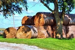 Iowa Round Bales