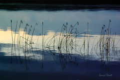 Rivers edge (Jan_ice) Tags: river reeds graphic dusk blues bandsofcolour