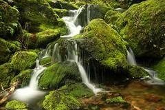 Rocks, Moss, & Water