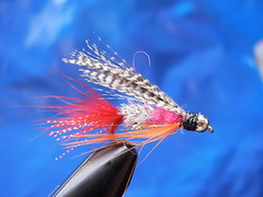 Mentor the fishing fly (Dr hoddsson) Tags: nature iceland fishing flyfishing trout fishingfly articchar víðidalsá