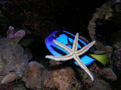 STAR STRUCK BLUE TANG DSCN1332