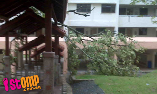 Strong wind uproots tree and causes it to damage shelter