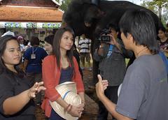 Chang(e) Caravan in Ancient Siam ช้างคาราวานที่เมืองโบราณ