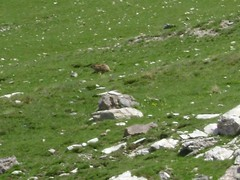 """On the way to the lake """"Lac d'Allos"""" and to the mountain pass """"Col de l'Encombrette"""" (Hlne_D) Tags: park lake france animal nationalpark lac paca marmot np provence parc picnik mercantour alpesdehauteprovence marmotte ahp allos parcnationaldumercantour parcnational provencealpesctedazur parcdumercantour mercantournationalpark lacdallos mercantournp alloslake coldelencombrette hlned"""