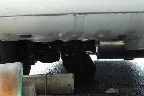 Today's Cat@20090929