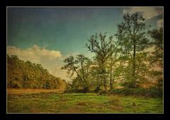 (zozma*) Tags: france tree landscape ciel arbre hdr textured poitou 3xp photomatix softhdr hdrenfrancais