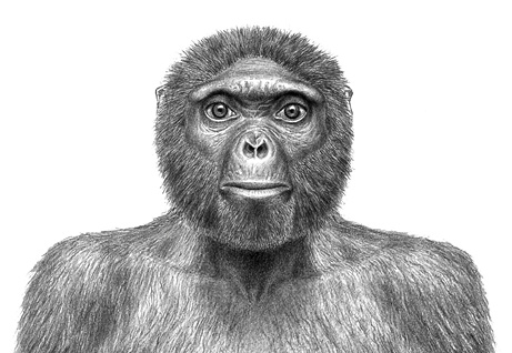 091001-oldest-human-skeleton-ardi-missing-link-chimps-ardipithecus-ramidus_big
