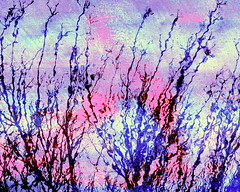 rippled reeds soft (Scribbles With Cameras) Tags: pink shadow reflection water silhouette reeds soft violet multipleexposure ripples photographicart picasa3