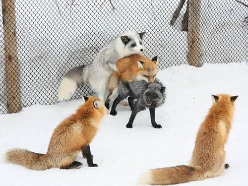Partouze animale (1) par vous