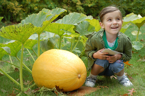 Little girl with a mighty big pumpkin.