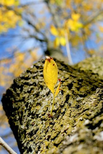 Fall in PA