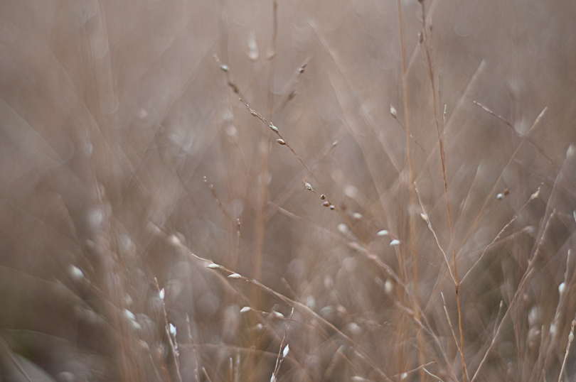 Seedling (42/365)