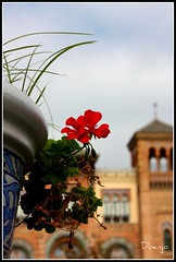 Gitanilla (Doenjo) Tags: españa doenjo plazadeamérica andalucía sevilla jpa001 retofs1 parquedemaríaluisa aníbalgonzález lmdd flores instagram