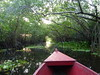 Going through the mangroves.