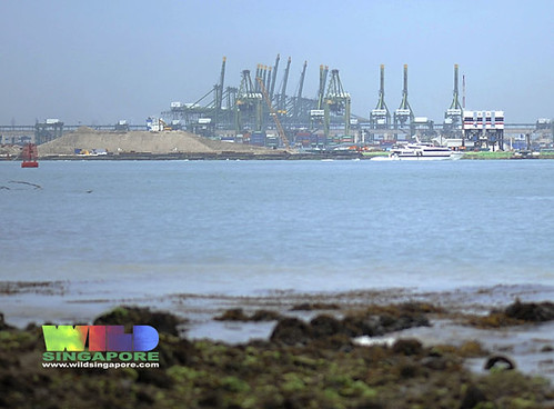 Pasir Panjang reclamation from Sentosa shore