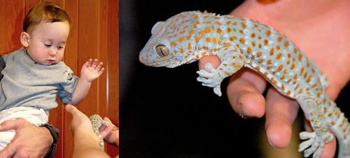 Andrew gecko