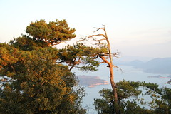 IMG_3526 (robotsandelephants) Tags: japan hiroshima miyajima itsukushima