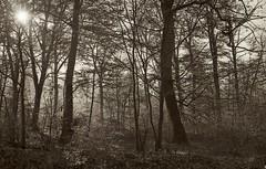 Fort de Haye  0344a (domiloui) Tags: nature sepia lumiere paysage brume matin ambiance nuances feuillage nomeny abaucourt