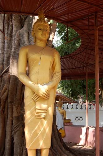 Sunday Buddha