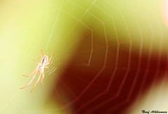 Spider (Nouf Alkhamees) Tags: macro canon spider 100mm alk nono  nouf        alkhamees noufalkhamees  suwitzerland