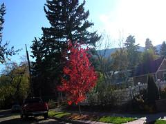 Fall Colors Boulder   DSCN0526
