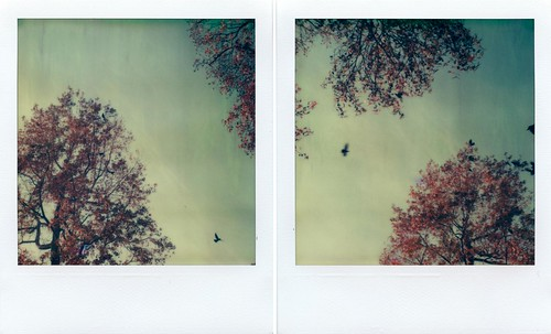 Crows & Trees Diptych