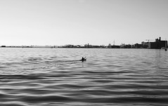 Smooth Waters (sniderscion) Tags: urban bw white lake toronto ontario canada black nature water skyline scott nikon kayak waves cityscape quiet harbour smooth paddle canadian inner solo lakeontario tranquil gentle snider d80 nikkoraf50mmf14d flickrgolfclub sniderscion clanflickr