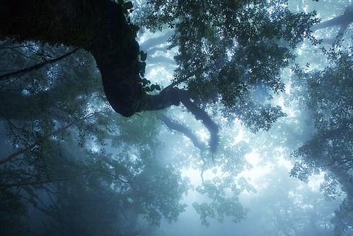 フリー画像| 自然風景| 樹木の風景| 霧/靄| 森林/山林| 屋久島| 日本風景| 世界遺産/ユネスコ|    フリー素材|